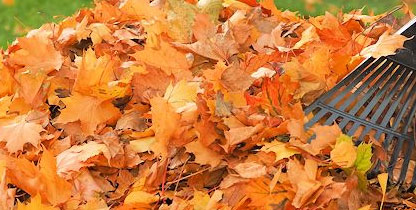 fall-cleanup-leaf-removal
